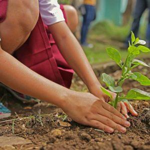 EcoSafe Compost soil amendment
