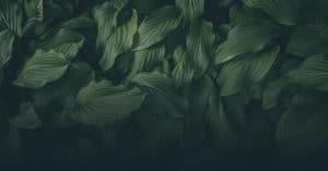 Ecosafe Green   Zero waste - leaves