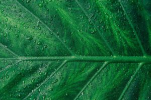 Ecosafe Green | Zero waste - closeup of a leaf