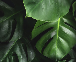 Ecosafe Green | Zero waste - plant leaves