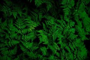 Ecosafe Green | Zero waste - fern