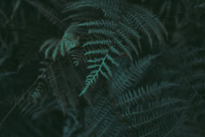 Ecosafe Green | Zero waste - fern