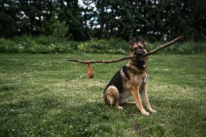 Ecosafe Green | Zero waste - dog with stick